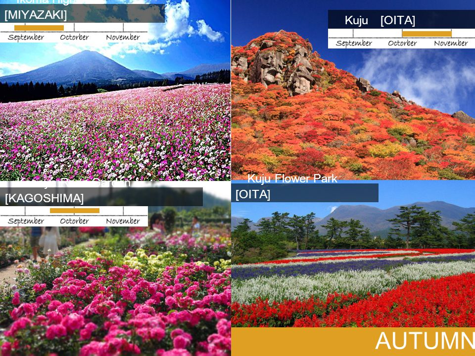 AUTUMN Ikoma Highlands [MIYAZAKI] Kuju [OITA] Kuju Flower Park [OITA]